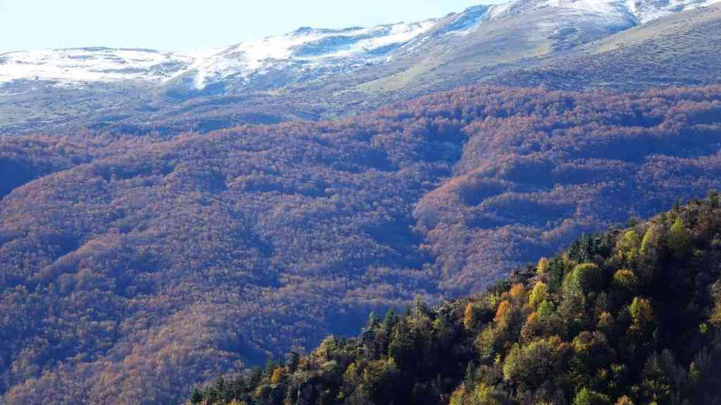 Javaher Deh - autumn foliage forest and snow-capped mountains