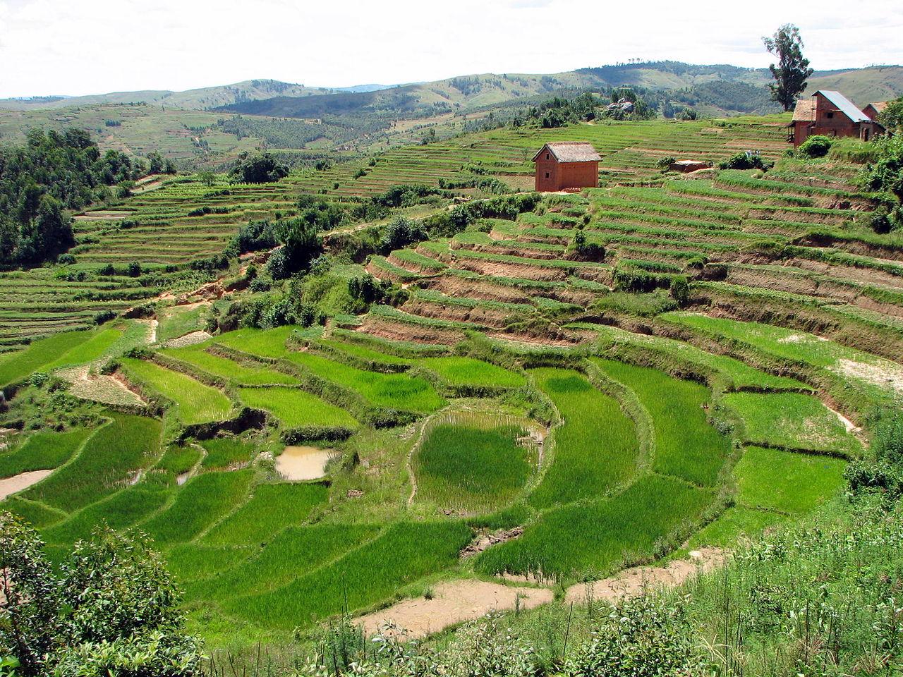 Madagascar terraced fields
