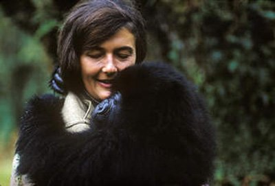 Dian Fossey holds a baby gorilla