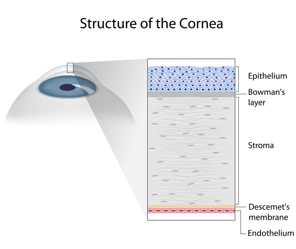 Understanding And Treating Corneal Scratches And Abrasions