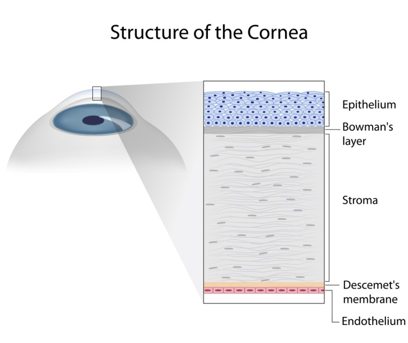 cornea layers - corneal scratches and abrasions