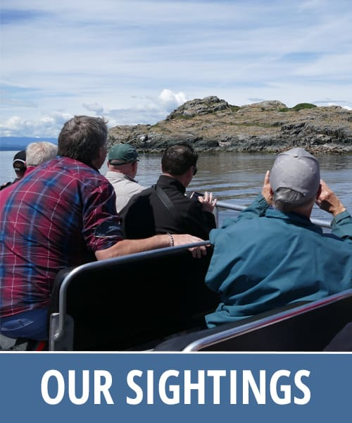 Discovery Marine Safaris- Our Sightings