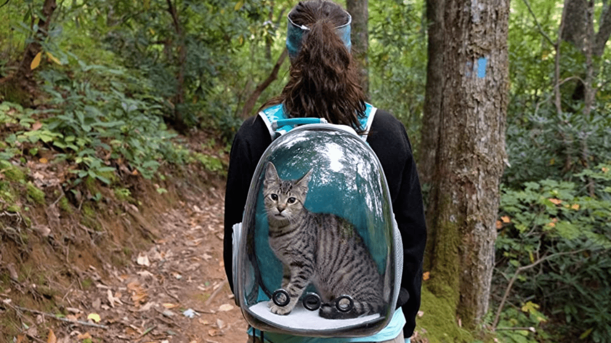 Lollimeow Pet Carrier: A backpack that allows you to take your kitty anywhere