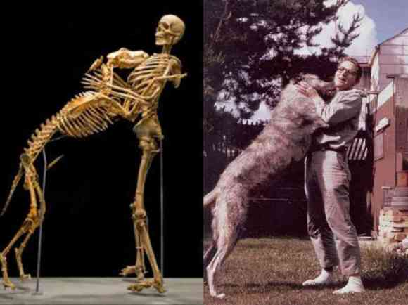 Anthropologist Grover Krantz donated his body to science with this one condition