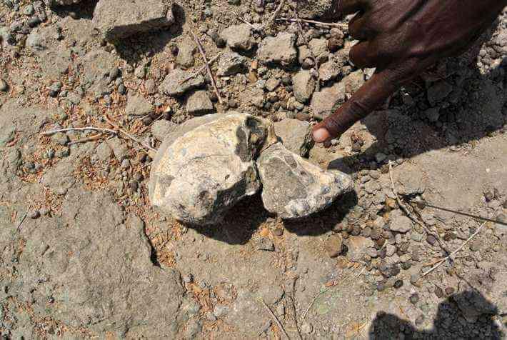Rare Hominin skull excavated in Ethiopia
