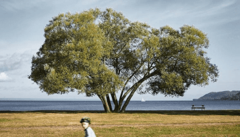The rise and tragic death of Sweden's Broccoli Tree
