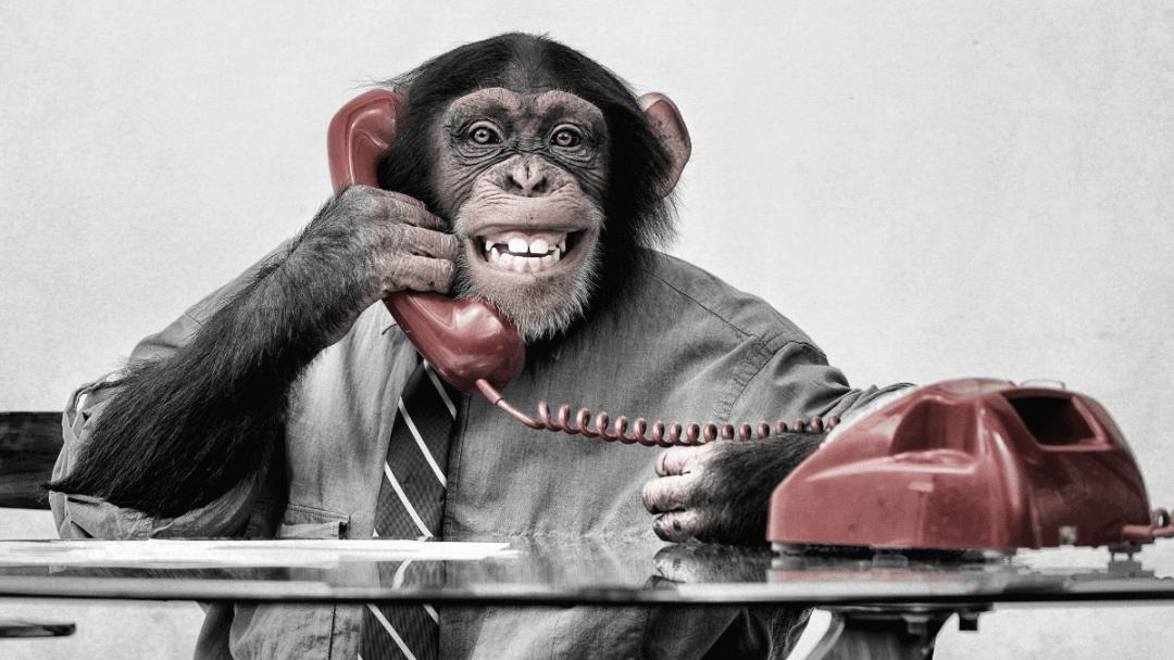 Chimpanzee using Instagram