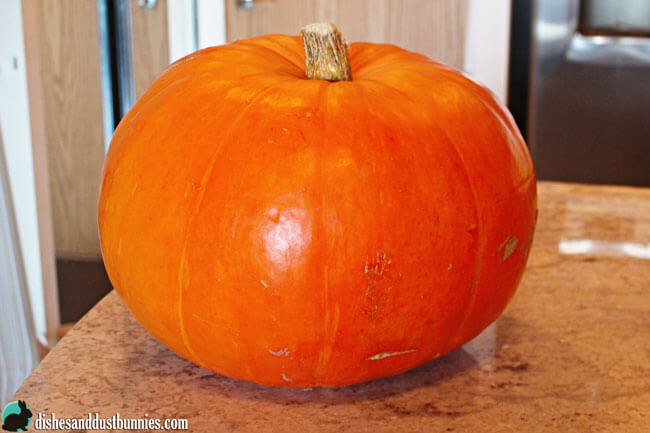 Make Your Own Pumpkin Puree from dishesanddustbunnies.com
