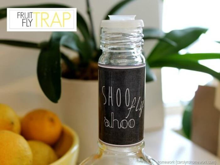 Homemade Fruit Fly Trap from Home Work