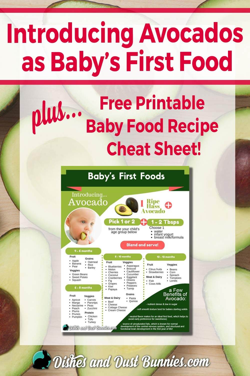 Introducing Avocados as Baby's First Food - Plus Free Printable Baby Food Recipe Cheat Sheet from dishesanddustbunnies.com