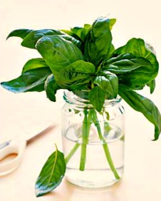 Keep fresh basil in a glass of water at room temperature, out of direct sunlight.
