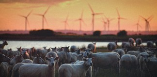 Cambiemos árboles por turbinas eólicas