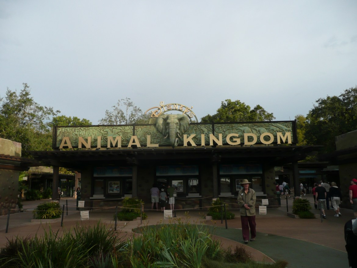 10 of Our Favorite Animal Kingdom Tips and Tricks