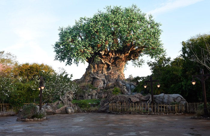 5 Spots Animal Kingdom
