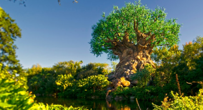 Best Attractions Animal Kingdom Little No Wait