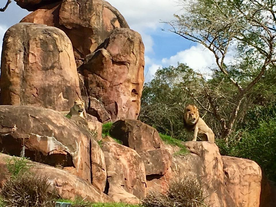 Celebrating the Anniversary of Kilimanjaro Safaris
