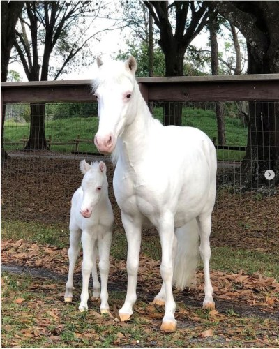 baby pony tri-circle ranch