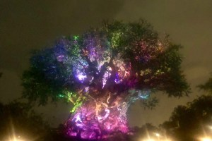 Tree of Life Awakenings - Top 5 Attractions