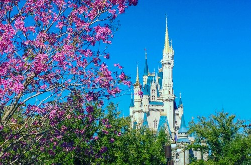 castle in spring