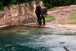 Kilimanjaro Safari - Baby Elephant - Top 5