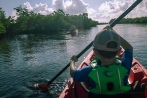 mangrove path
