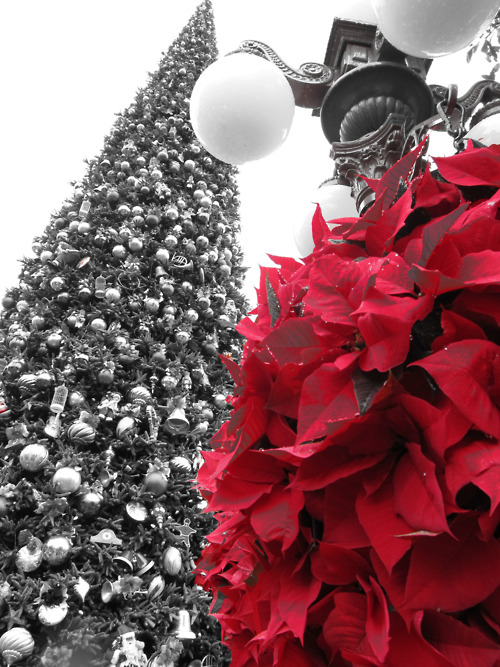 Disneyland Christmas 2010 Main Street Usa Christmas Tree