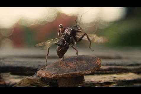 Ant Man Spoiler Free Review Disneyexaminer 2