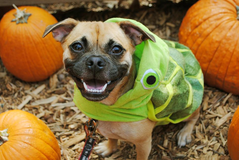 Disney Halloween Pet Costumes Crush Finding Nemo & Top picks for Disney-inspired Halloween pet costumes | DisneyExaminer