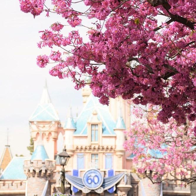 Castle Cherry Blossom 1