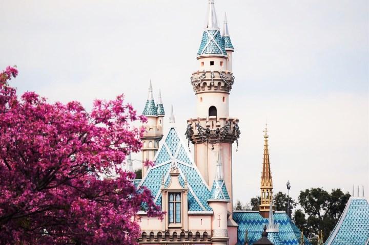 Castle Cherry Blossom