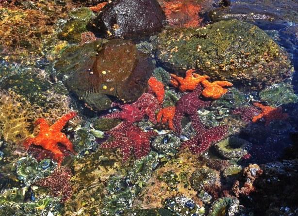 Laguna-Beach-Tide-Pools