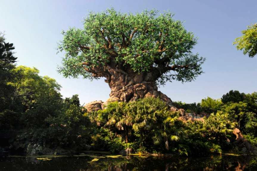 List of Lands in Animal Kingdom at Walt Disney World