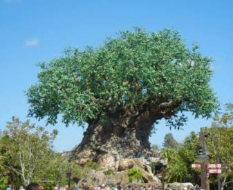 disneys animal kingdom news