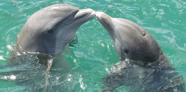"Disney Announces Next DisneyNature Film ""Dolphins"""