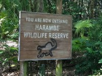 Harambe Wildlife Party (Disney World Parade)