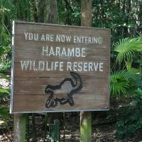 Harambe Wildlife Party (Disney World)