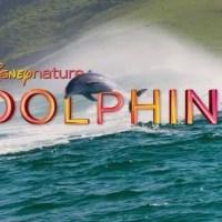 Disneynature: Dolphins