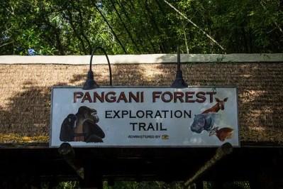 Pangani Forest Exploration Trail (Disney World Exhibit)
