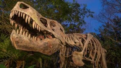 Dino Sue (Disney World Exhibit)
