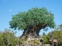 Tree of Life (Disney World Attraction)