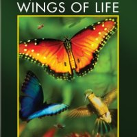 Wings Of Life (2013 Movie)