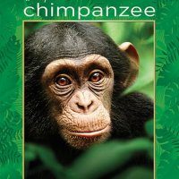 Chimpanzee (2012 Movie)
