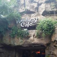 Rainforest Café Restaurant (Disney World)