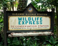 Wildlife Express Train (Disney World Ride)