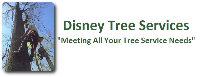 Disney Tree Services