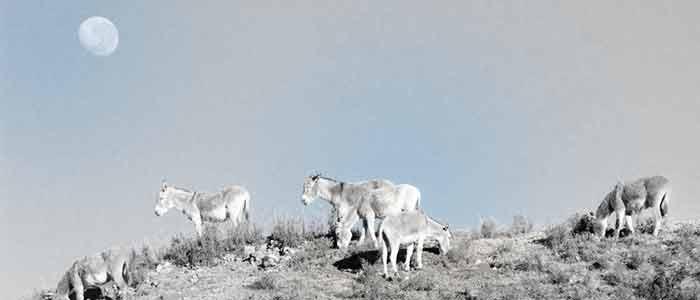 vallejo_burro