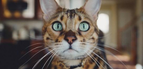 心配する猫