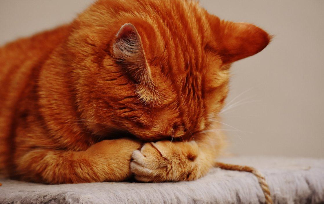 目を塞ぐ猫
