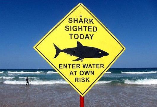 shark detection