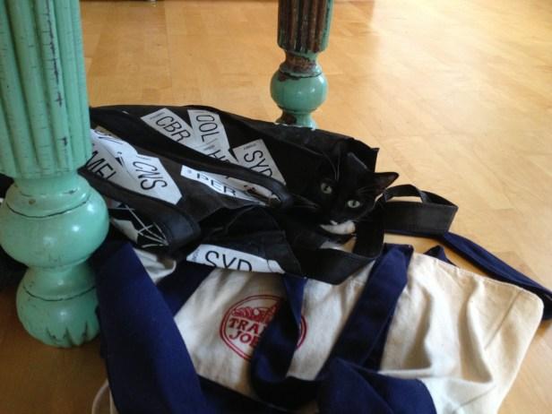 Lilah (cat) nesting in bags